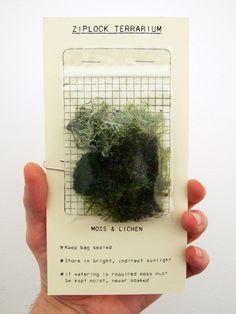 green thumb /// ziplock terrarium + design