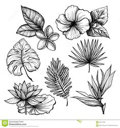 tropical-leaves-set-black-white-hand-drawn-flowers-isolated-vector-illustration-58414798.jpg (1300×1390)