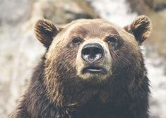Free Image on Pixabay - Brown Bear, Grizzly, Canada, Mammal Chest Routine, Pvt Canada, Free High Resolution Photos, Bear Pictures, Canvas Designs, Kingfisher, French Press, Brown Bear, Mammals