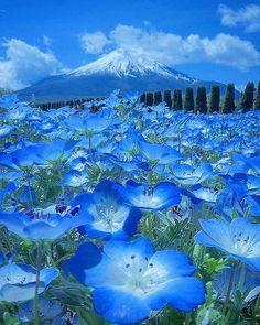 National Destinations: Yamanashi, Japan Photo by Beautiful World, Beautiful Places, Monte Fuji, Yamanashi, Japan Photo, Nature Wallpaper, Nature Pictures, Amazing Nature, Pretty Pictures