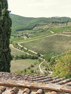 Vignoble du Chianti province of Siena , Tuscany region Italy