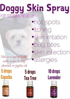 Doggy skin spray made with essential oils - for relief of allergies, itching, hot spots and can be used on other skin infections and cuts - young living by Drmgirl Essential Oils Dogs, Essential Oil Uses, Doterra Essential Oils, Essential Ouls, Yl Oils, Young Living Oils, Young Living Essential Oils, Itchy Dog, Oils For Dogs