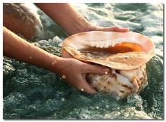 Cleaning a Conch Shell Disney Aesthetic, Princess Aesthetic, Character Aesthetic, Aesthetic Pics, Aesthetic Wallpapers, Devon, I Am Moana, Disney Films, Disney Characters