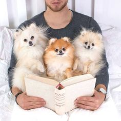 Pomeranians love being read to