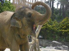 super_happy_elephant__3_by_gem_313_gem-d387gno.jpg