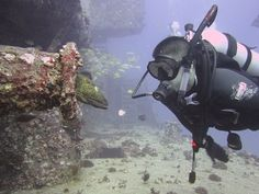Scuba dive and swim with beautiful sea creatures-- why not?!?