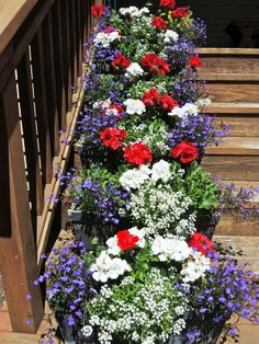 We know lobelia as an attractive annual herb with many varieties, all coming in different attractive colors. It is a beautiful addition to any garden