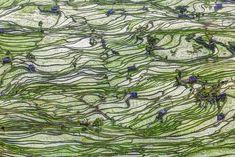 22+ Hypnotizing Rice Fields That Look Like Broken Glass | Bored Panda