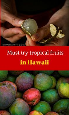 Here are the most popular and exotic tropical fruits that you should try when you visit Hawaii. Check out the local farmers markets or fruit stands and look for some of these tropical fruits in season . Hawaii 2017, Visit Hawaii, Hawaii Life, Mahalo Hawaii, Kona Hawaii, Honolulu Hawaii, Hawaii Honeymoon, Hawaii Vacation, Hawaii Wedding