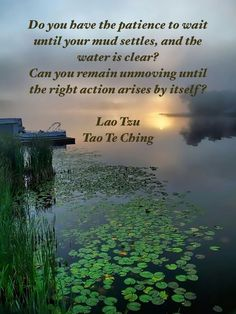 """Do you have the patience to wait until your mud settles, and the water is clear? Can you remain unmoving until the right action arises by itself?"" ― Lao-tzu ..*"