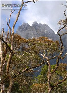 From Mesilau, the Nepenthes trail to the summit offers stunning photo opportunities of the Borneo wilderness. Mount Kinabalu, Sea Level, Borneo, Natural World, Wilderness, Trail, Exotic, Mountains, Places
