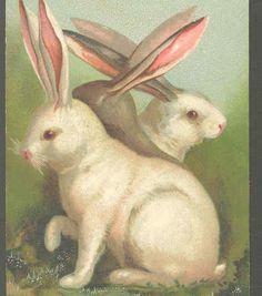 Scarce Gorgeous Rabbits Portrait Easter Greeting Silver Trim Vintage Postcard | eBay