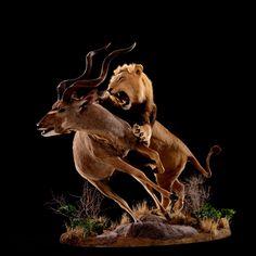 Lion Attacking Greater Kudu – Pose #21 – Animal Artistry