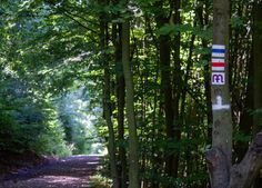 5 látványosság a Mátrából Hungary, Places To Travel, Countryside, The Good Place, Trail, Photo Editing, Trees Beautiful, Royalty Free Stock Photos, Green