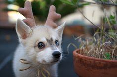 """Deer dog says, """"Merry Christmas!""""  And also, """"Get me a cookie!"""""""