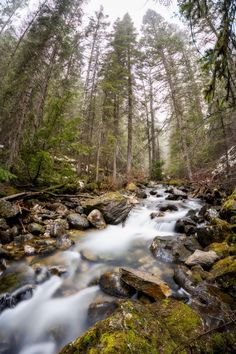 #nature #beautiful #scenery Misty morning on Bass Creek Montana [2560x3840] [OC]