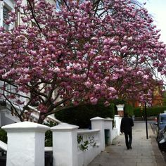 Primrose Hill - A beautiful area in London with a stunning view over London & cute little cafes. But watch out: You might have to share tables with Kate Moss, Jude Law or Sienna Miller, all part of the famous Primrose Hill clique.