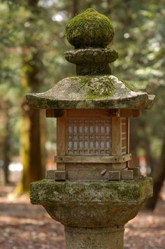 How to care for your Ficus Bonsai Japanese Lighting, Japanese Stone Lanterns, Japanese Lamps, Japanese Garden Design, Japanese Landscape, Japanese Gardens, Garden Lanterns, Garden Lamps, Garden Theme