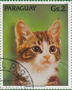 Art Folder, Cat Posters, Vintage Cat, Fauna, Stamp Collecting, Cat Art, Postage Stamps, Pet Birds, Cats And Kittens