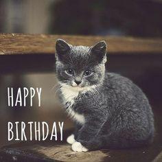 Happy Birthday Card Wishes cute kitty