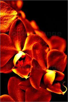 Orchidee entflammt
