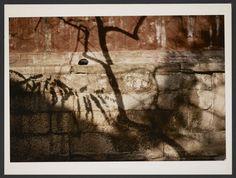 Michel Delaborde, Chine, (ombres d'arbres sur le mur) 1981-1982. © Ministère de la culture (France), Médiathèque de l'architecture et du patrimoine, Diffusion RMN-GP