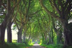 The Dark Hedges, Stranocum, County Antrim   33 Places In Ireland You Won't Believe Are Real