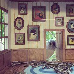 Jada Fitch es de Portland, es ilustradora, y le gustan tanto los pájaros que se dedica a crear casas diminutas para ellos. Les pone una bonita decoración y las llena de comida deliciosa, para luego colgarlas de las ventanas de su casa, desde donde puede observar a las pequeñas aver de cerca y hacerles fotos y vídeos.