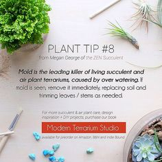 Plant Tip #8, deals with the leading killer of plants, mold. We are continuing to share plant tips inspired by our book, Modern Terrarium Studio, now available for preorder! To learn more about why, along with design inspiration & original DIY plant proj | Flickr - Photo Sharing!