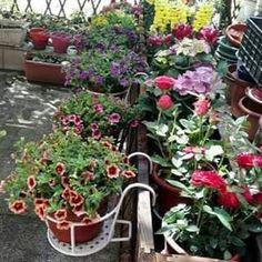 Flower Stands, Rustic Gardens, Shade Plants, Diy Garden Decor, Raised Garden Beds, Garden Planters, Hanging Plants, Hanging Baskets, Garden Projects