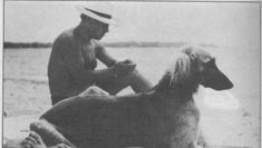 Picasso with Afgan Kasbec in the south of France. Picasso_afghan_hound_2