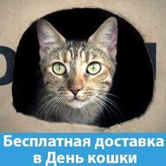 """Как обычно магазин """"Котяра"""" празднует День кошки. И в качестве подарка для покупателей мы обеспечиваем бесплатную доставку всех* заказов, оформленных 29 октября**. Cats, Animals, Gatos, Animaux, Animales, Cat, Kitty, Animal, Dieren"""