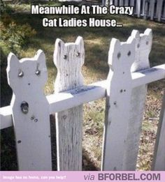 the cat ladys house fence