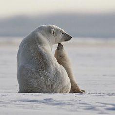 Polar bear winning photo for Share the Experience. Photographer--Teller.