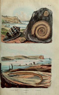 1 | 1855 |   Dictionnaire pittoresque d'histoire naturelle et des phénomènes de la nature / - Biodiversity Heritage Library