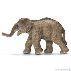 The Asian Elephant Calf romps with his friends
