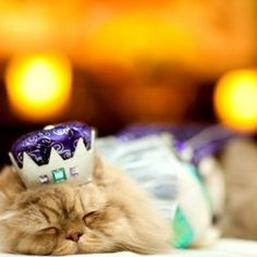 I might be dress up but leave me alone it is my nap time even if it is on the runway...