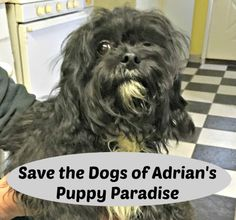 Petition: Save Dogs of Adrian's Puppy Paradise