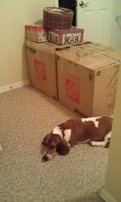 Moving Tips for Your Dog, not just the same old advice. Really good stuff.
