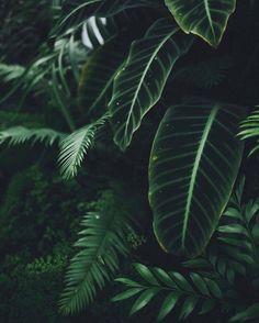 Regardez cette photo Instagram de @plantsinfocus • 3,137 J'aime