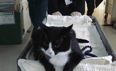 Este gato de terapia trás alegria para pacientes terminais - ÓtiMundo!