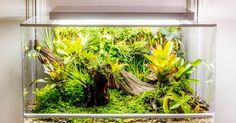 Biopod is a smart habitat you control with your phone. All you have to do is pick the kind of environment you want through a mobile app, and the Biopod can do the rest -- it regulates factors like the humidity, light, temperature and even artificial rainfall for plants and pets.