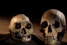 Dmanisi - დმანისი, 1.8 million year old hominins | Georgia (Country) | საქართველო