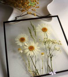 Framed Herbarium Pressed daisy frame for natural wall art decor, for living room or bedroom in rustic/ farmhouse style #etsy #pressedflowerart #rusticdecor #farmhousestyle<br> Rustic Farmhouse Decor, Rustic Decor, Farmhouse Style, Flower Frame, Flower Wall, Summer Flowers, White Flowers, Daisy Flowers, Flowers Garden