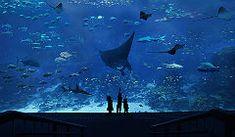 Largest Aquarium in the world | S.E.A. Aquarium | Resorts World Sentosa Singapore