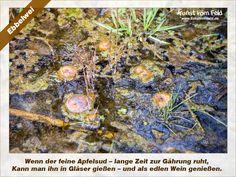 Kunst vom Feld: Ebbelwei – www.kunstvomfeld.de