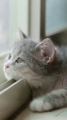 Whatcha thinking about, little sweetie?