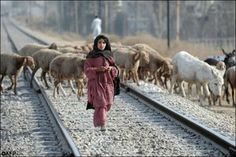 A #Pakistani girl herds sheep over a railway track in Rawalpindi on January 21, 2010. AFP
