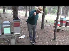 Fat Beeman     on How To Light A Bee Smoker - Filmed by SoMDBeekeeper