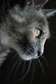 cat photography #inspiration